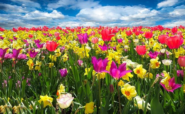 spring-awakening-1197602_640