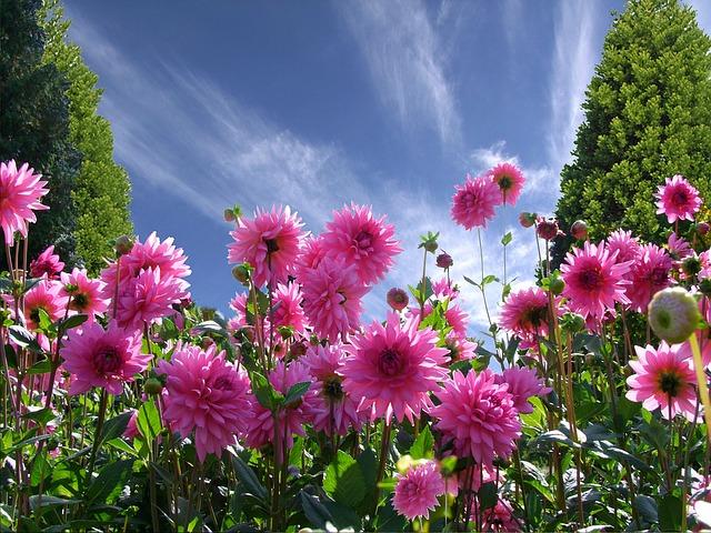 a-beautiful-day-1170686_640