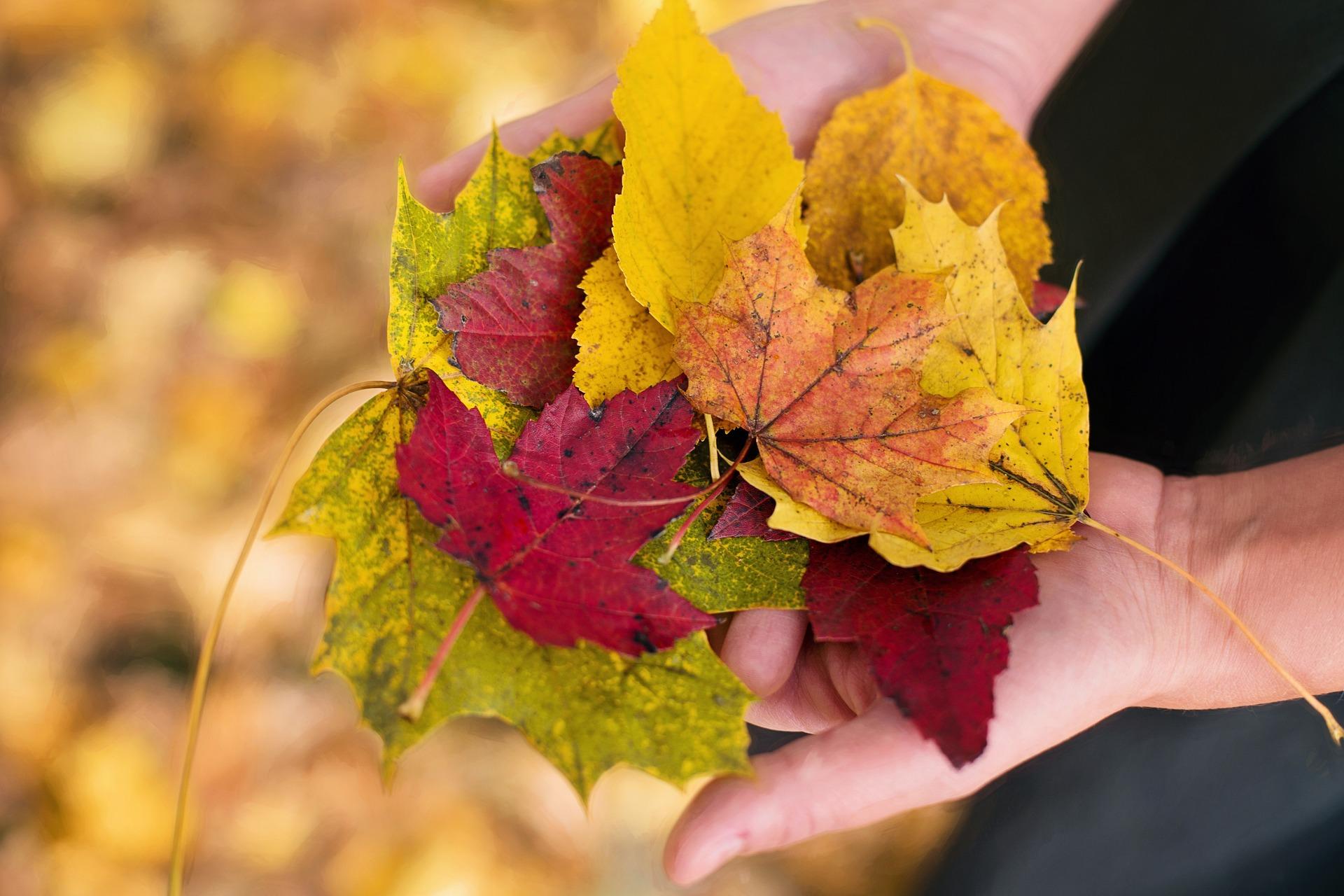 fall-leaves-1010579_1920